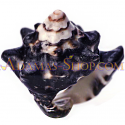 จิวเวลรี่ เครื่องประดับ เปลือก หอย แท้ ธรรมชาติ ดีไซน์ แปลก ซื้อ ขาย ราคา ถูก หอย อบาโลน สังข์ หิน นำ โชค เสริม ดวงหนุน ดวง