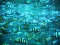 ให้อาหารปลาที่เกาะทะลุ