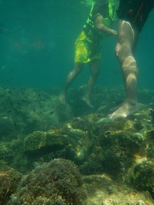 เหยียบปะการัง