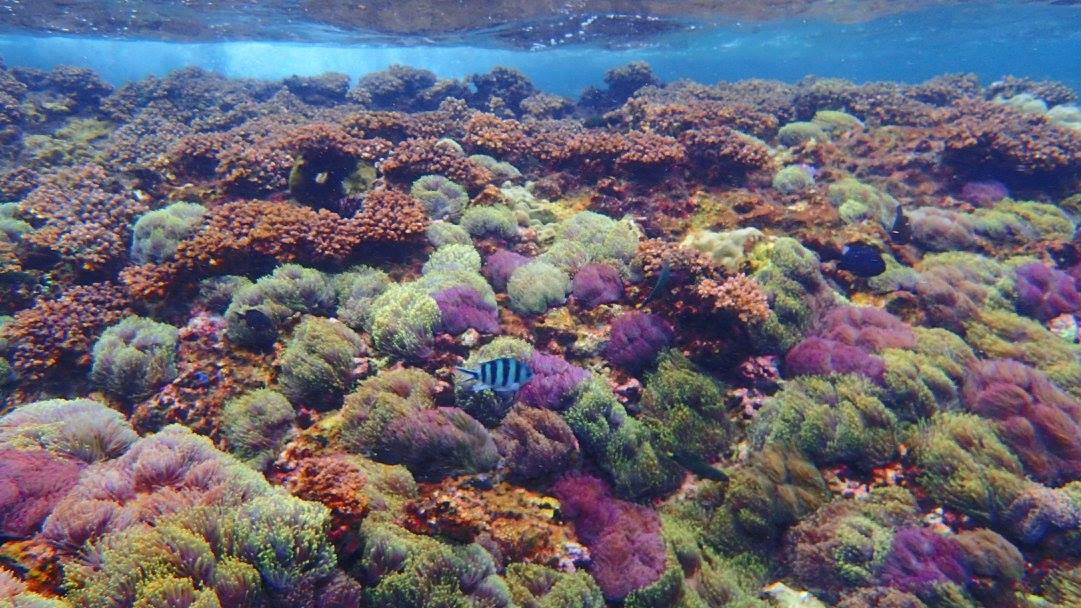 ปะการังสวยๆ