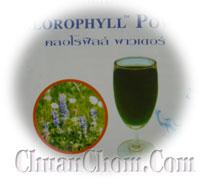 คลอโรฟิลล์ เพาวเดอร์ Chlorophyll Powder คลอโรฟิลด์