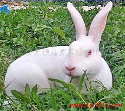 กระต่าย ทาทู่