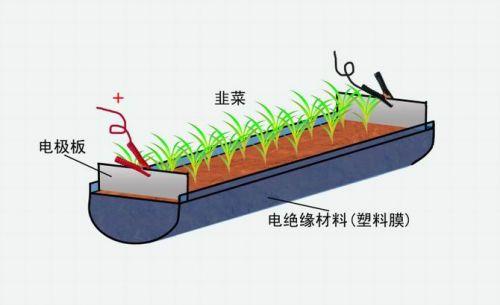 ภาพสาธิตการใช้ไฟฟ้ากำจัดโรค   แมลงใต้ดิน