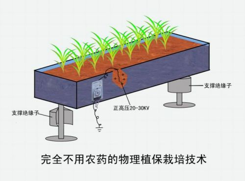 ภาพแสดงการปลูกพืชที่ไม่ต้องใช้สารเคมี