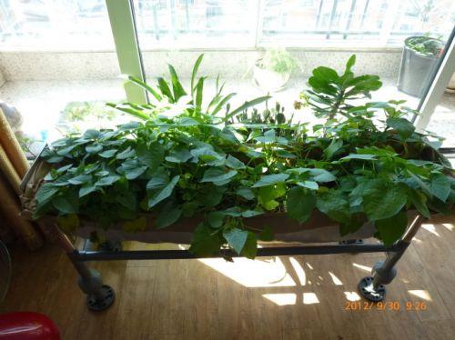 กระบะปลูกพืชสาธิต