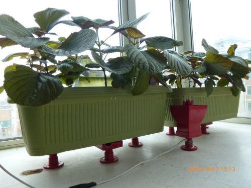 กระบะปลูกพืชสาธิตผลของอุปกรณ์