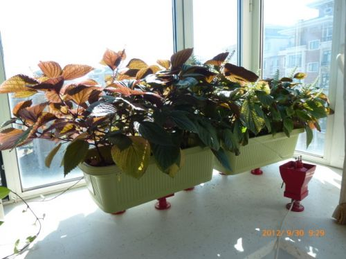 นี่ก็แปลงปลูกพืชที่สาธิตการใช้อุปกรณ์ฯ