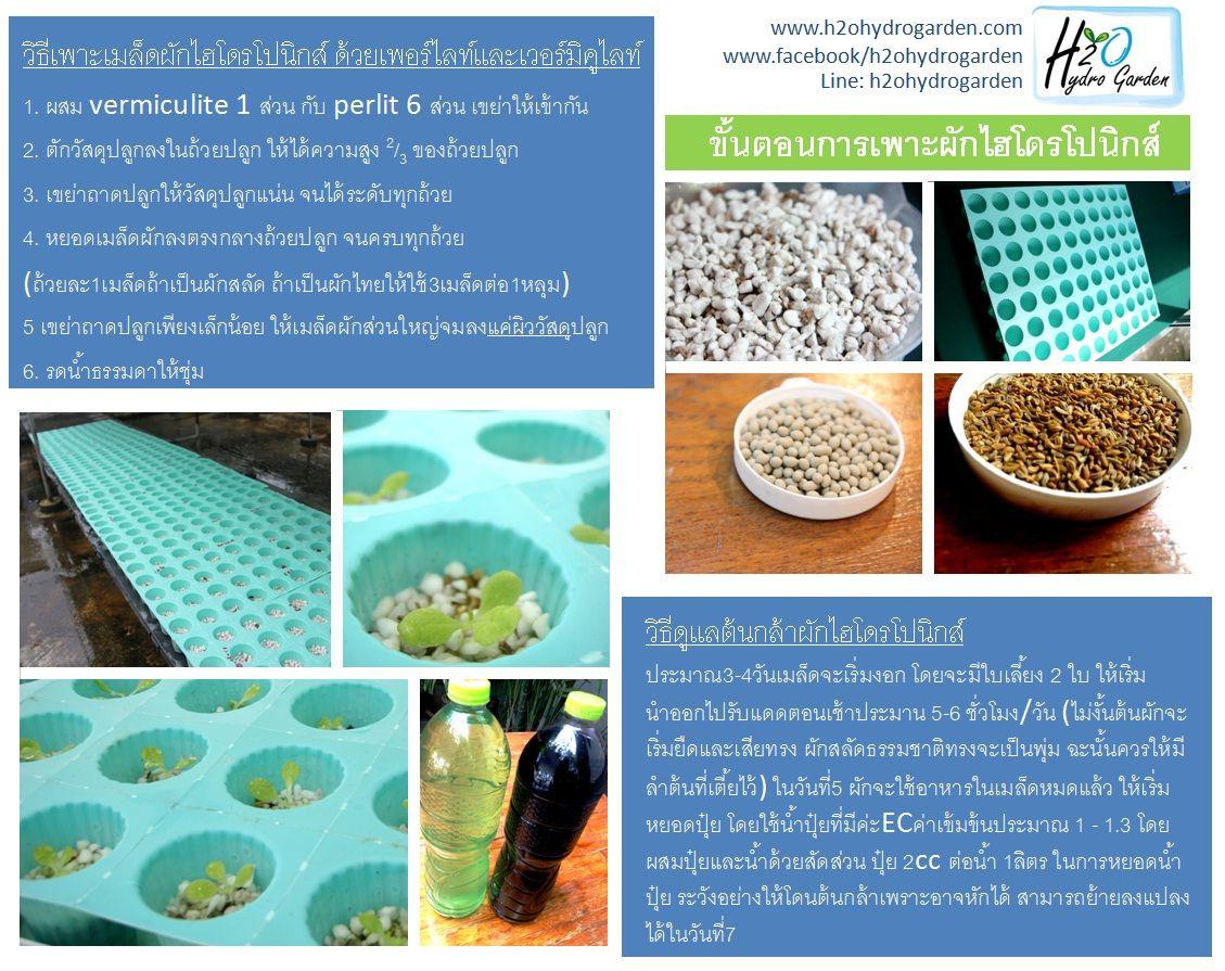 ขั้นตอนการปลูกผักไฮโดร วิธีการปลูกผักไฮโดร การปลูกผักไฮโดร การเพาะผักไฮโดรโปนิกส์ วิธีปลูกผักไฮโดร วิธีปลูกพืชไร้ดิน การปลูกพืชไร้ดิน วิธีการปลูกพืชไร้ดิน ขั้นตอนการปลูกผักแบบไร้ดิน พืชไร้ดิน การปลูกผักไร้ดิน