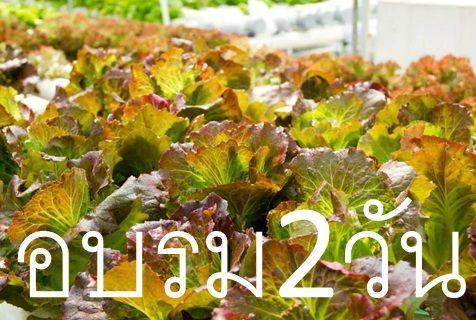 อบรมไฮโดร เรียนปลูกผักไฮโดรโปนิกส์ อบรมปลูกผักไฮโดร การปลูกผักไฮโดร การปลูกผักไร้ดิน