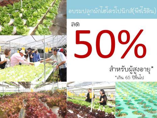 อบรมปลูกผักไร้ดิน พืชไร้ดิน การปลูกพืชไร้ดิน การปลูกผักไฮโดร