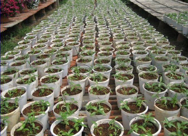 ปลูกพืชในวัสดุปลูก