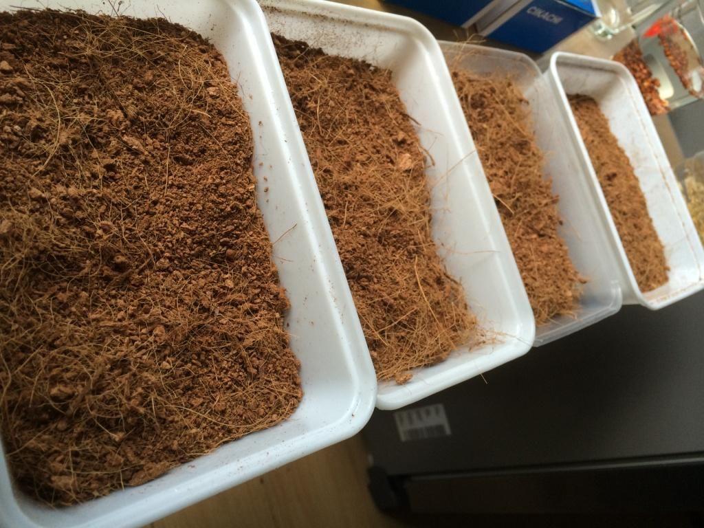 การปลูกข้าวสาลี การเพาะข้าวสาลี วิธีการปลูกข้าวสาลี ขั้นตอนในการปลูกข้าวสาลี