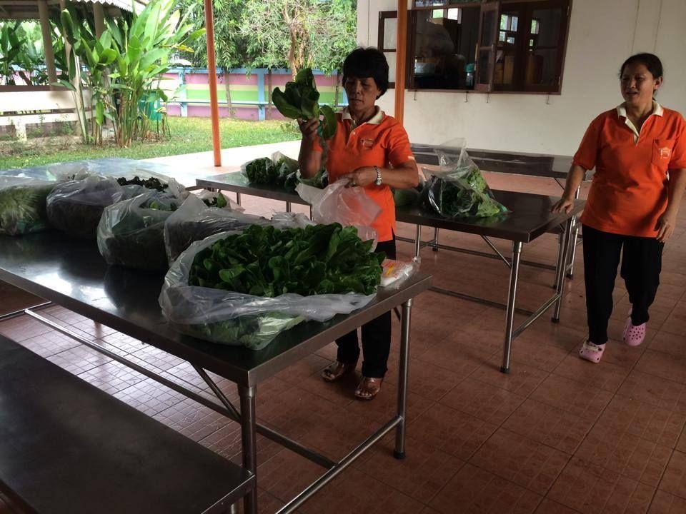 พนักงานบ้านบางแค บริจาคผักไฮโดร ผักปรอดสาร ผักไร้ดิน ปลูกผักกรุงเทพ ปลูกผักในเมือง
