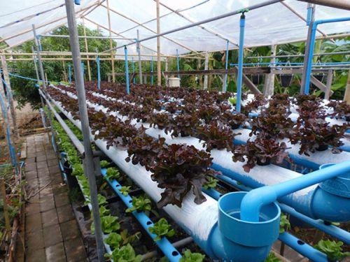 การปลูกผักไฮโดร การทำรางปลูกผัก การสร้างรางปลูกผัก การทำรางไฮโดรโปนิกส์ รางปลูกผักไฮโดรโปนิกส์ วิธีสร้างรางปลูกผัก