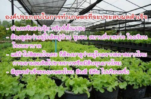 การทำเกษตร ปลูกผักไฮโดร ปลูกผักไฮโดรโปนิกส์ ปลูกพืชไร้ดิน ปลูกผักเป็นอาชีพ หารายได้ การปลูกผัก วิธีการปลูกผัก