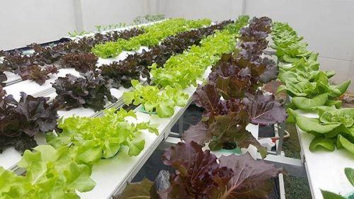 รกิจปลูกผักไฮโดรโปนิกส์ ปลูกผักไฮโดร ปลูกพืชไร้ดิน การปลูกพืชไร้ดิน อุปกรณ์ ธุรกิจ