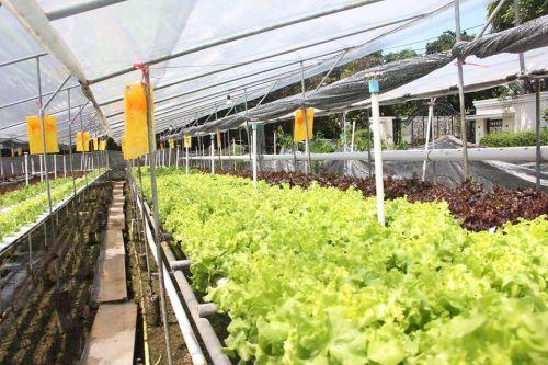 ขายผักสลัด การตลาด ปลูกผักไฮโดร การปลูกผักไฮโดร ทำธุรกิจผักไฮโดรโปนิกส์ การปลูกผักไฮโดรโปนิกส์ ตลาด ลงทุน การลงทุน มือใหม่