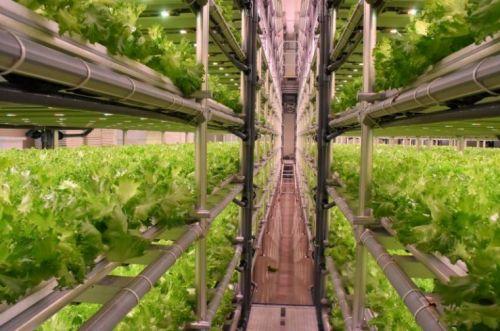 การปลูกผักไฮโดรโปนิกส์ วิธีปลูกผักไฮโดร ปลูกพืชไร้ดิน การใช้ไฟLED ปลูกผักในร่ม LED