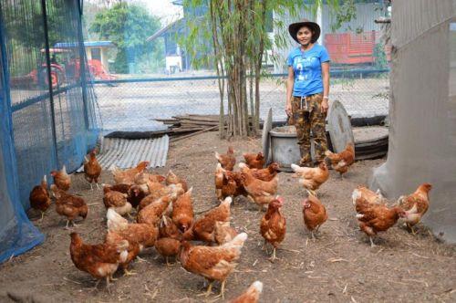 ปลูกผักไฮโดร อาชีพ ฟาร์มผักไฮโดร ทำฟาร์มผัก วิธีการปลูกผักไฮโดร พืชไร้ดิน ผักปรอดสาร ปลอดสาร