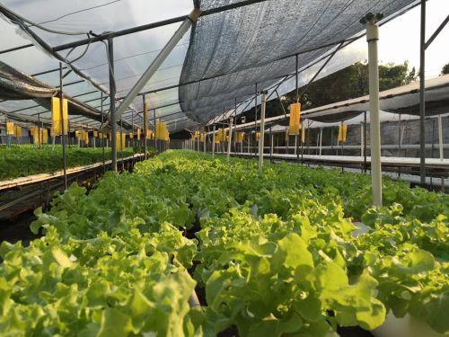 ปัญหาที่พบบ่อย การปลูกผักไฮโดรโปนิกส์ ผักไฮโดร ปัญหา โรค แมลง ไฮโดร โรคที่เจอบ่อย รางปลูก การทำความสะอาด ผักไร้ดิน