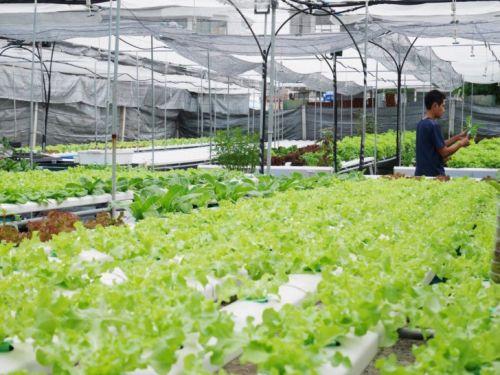 ปลูกผักไฮโดร วิธีปลูกผักไฮโดร การปลูกพืชไร้ดิน วิธีการปลูกพืชไร้ดิน ฟาร์มผักไฮโดร เรียนการปลูกผัก