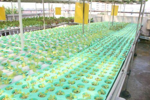 ปั๊ม แปลงปลูกผักไฮโดรโปนิกส์ ผักไฮโดร ฟาร์มไฮโดรโปนิกส์
