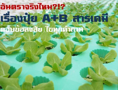 อันตราผักสลัด ผักไฮโดร สารพิษ สารตกค้างผักสลัด การปลูกไฮโดรโปนิกส์
