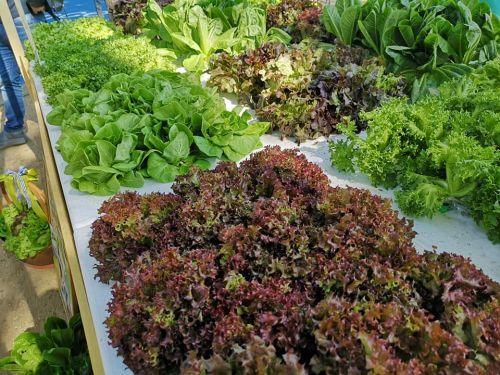 ออกบูธเพื่อสุขภาพ รักโลก ออกบูธขายผัก ออกบู๊ทขายผักสลัด งานออกบูธ รับออกบู๊ท สุขภาพ ขายสลัด
