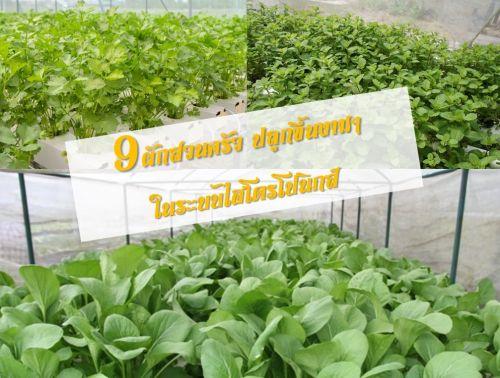 ปลูกผักไฮโดร เรียนปลูกผัก อบรมปลูกผักไร้ดิน กรุงเทพ hydroponics ไฮโดรโปนิกส์ ปลูกผักไร้ดิน
