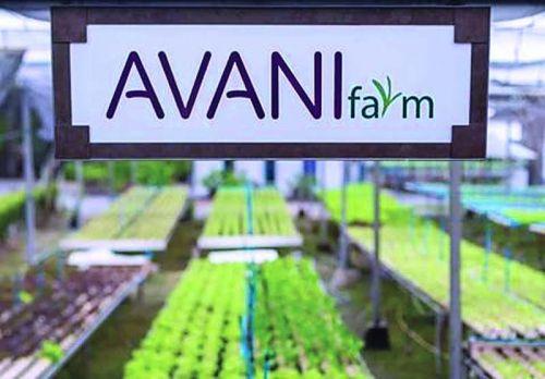 ฟาร์มปลูกผักไฮโดร ไฮโดรโปนิกส์ ปลูกผักไร้ดิน กักตัว Covid ช่วงกักตัว อยู่บ้าน