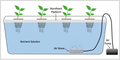 ปลูกผักน้ำนิ่ง น้ำนิ่ง ปลุกผักไฮโดร ปลูกผักไฮโดรน้ำนิ่ง ปลูกผักแบบน้ำนิ่ง ไอโดรโปนิกส์ Kratky Method