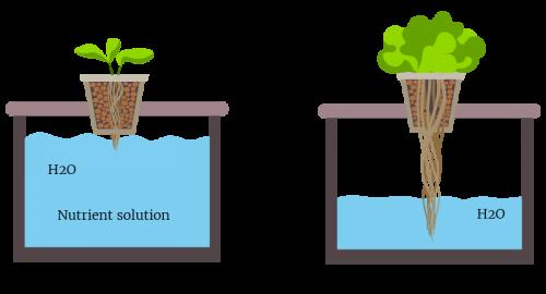 การปลูกผักน้ำนิ่ง น้ำนิ่ง ไฮโดรน้ำนิ่ง ปลูกผักไฮโดรแบบง่ายๆ ไฮโดรโปนิกส์ ปลูกผักสลัด
