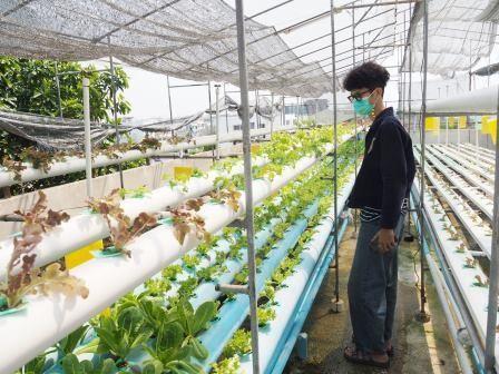 เรียนปลูกผัก ปลูกผักไร้ดิน พืชไร้ดิน ไฮโดร