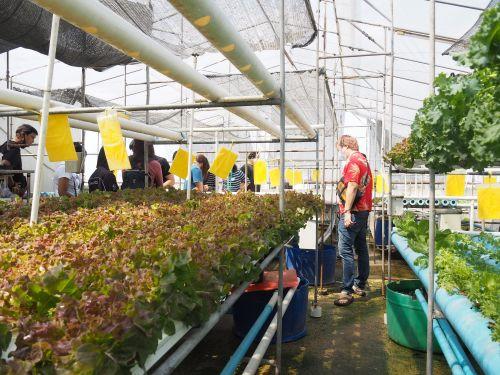 เรียนปลูกผัก ปลูกผักไร้ดิน พืชไร้ดิน ไฮโดร ไฮโดรโปนิกส์ อบรมปลูกผัก