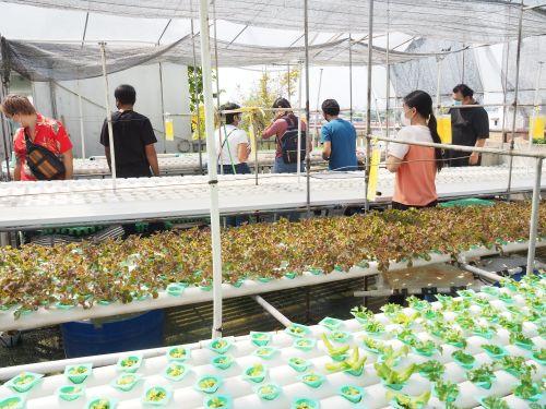 อบรมปลูกผัก ผักไฮโดรโปนิกส์ เรียนปลูกผัก ไร้ดิน ไม่ใช้ดิน