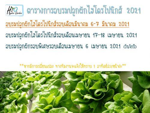 เรียนปลูกผัก ปลูกผักไร้ดิน พืชไร้ดิน ไฮโดรโปนิกส์