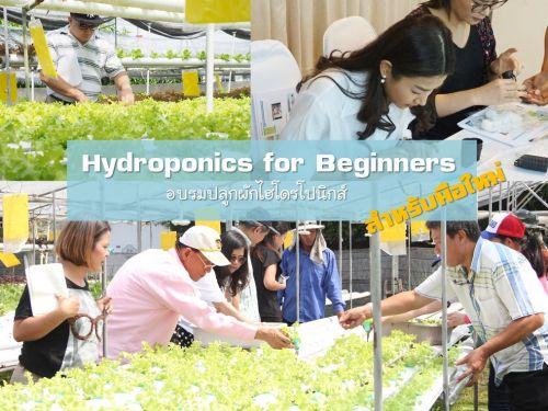 อบรม เรียนปลูกผัก ไร้ดิน ผักไร้ดิน พืชไร้ดิน อบรมปลูกผักไฮโดรโปนิกส์