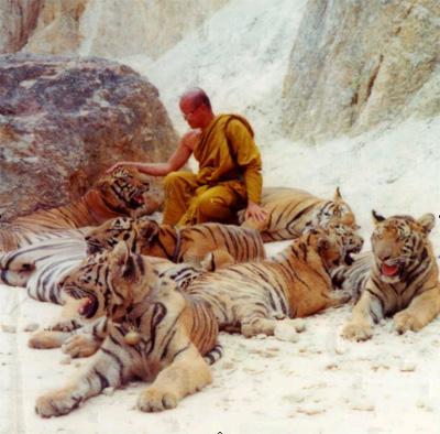 بودا و ببر در تایلند