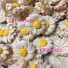 1,000 Cream Daisy Full Bloom Paper Wedding Flowers