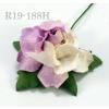 Half White Half Lilac Small May Roses Paper Flowers