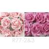 Mixed JUST 2 Pinks Tone Sweet Moon Roses
