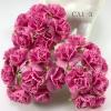 50 Solid Pink Carnation Flowers