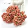 50 Cream with Pink Egde Variegated Carnation