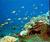 รูปภาพ ดำน้ำชมปะการัง หาดบ้านกรูด