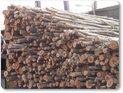 ไม้ท่อนยูคาลิปตัส