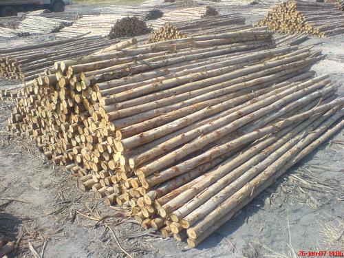 ไม้เข็ม ไม้ค้ำยัน ไม้ทำสะพาน ไม้ทำรั้ว