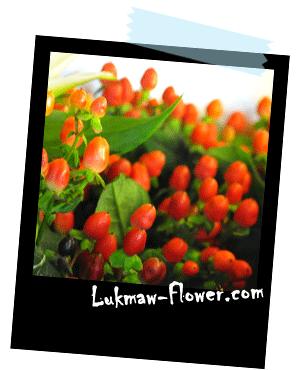 รูปดอกไม้ lukmaw-flower.com