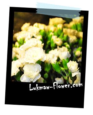 รูปดอกไม้สด lukmaw-flower.com