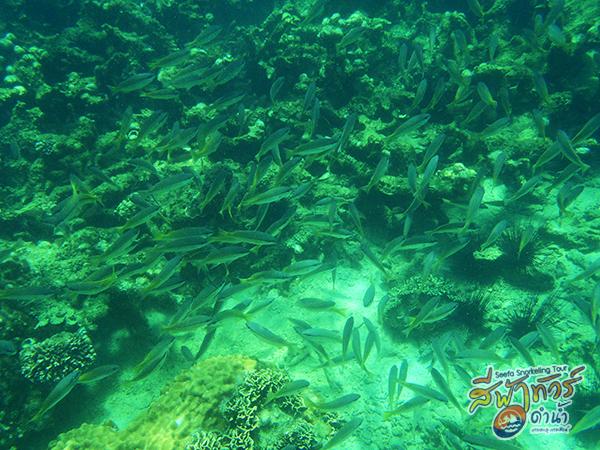 ปลาทะเล