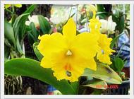 Thaiorchidnursery Com